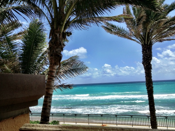 Palm Beach View